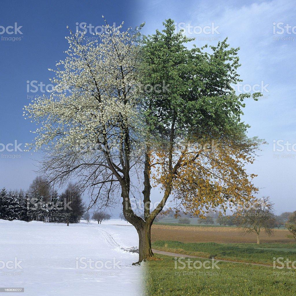 Four Season royalty-free stock photo