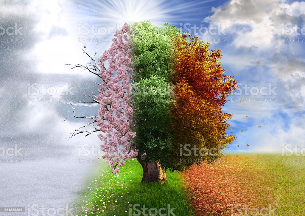 Four season tree, photo manipulation, magical, nature stock photo