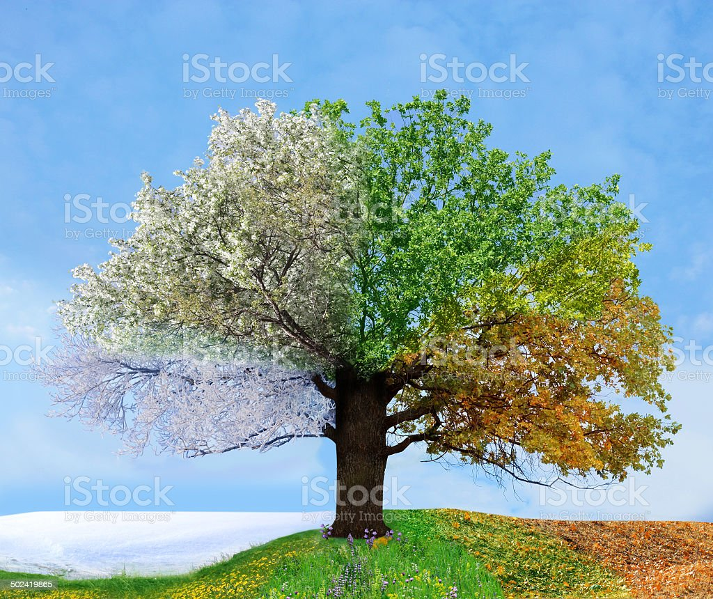 Four season tree stock photo