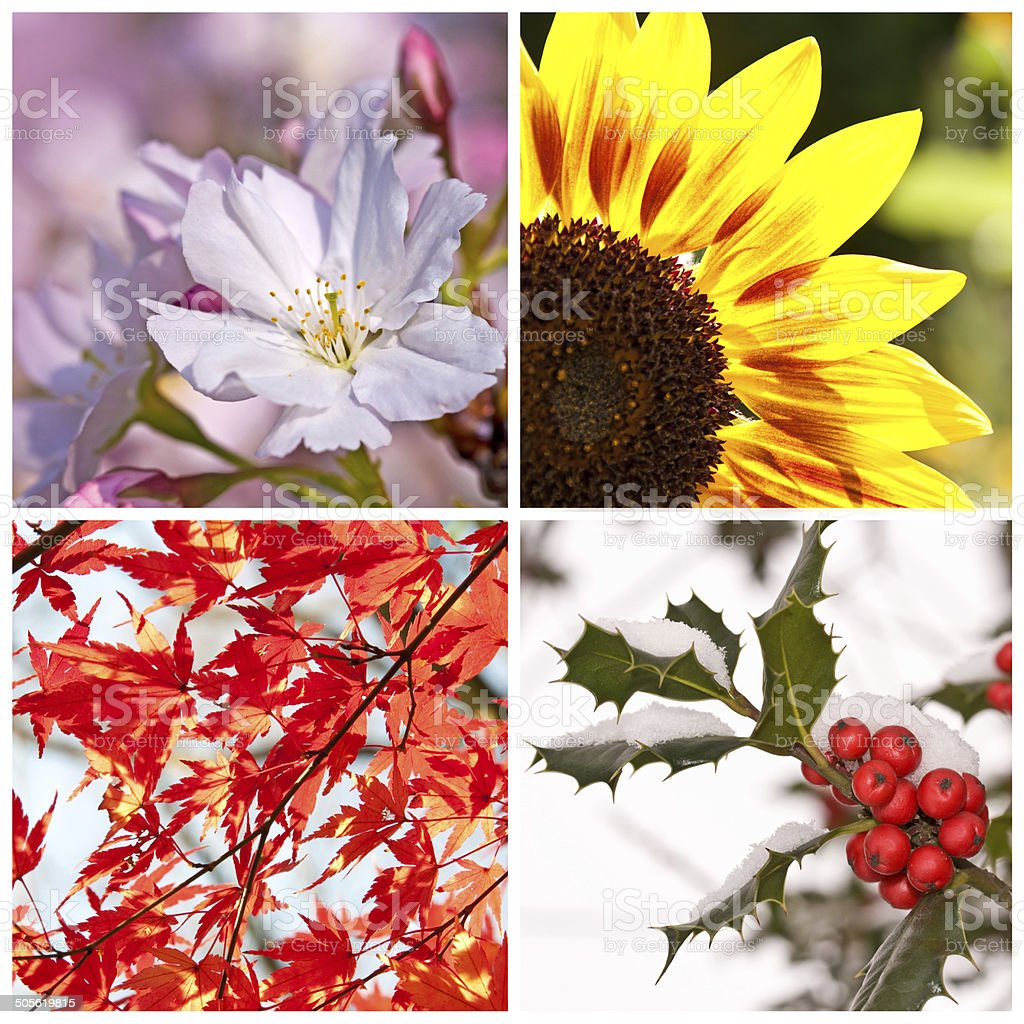 Four seasons collage concept stock photo