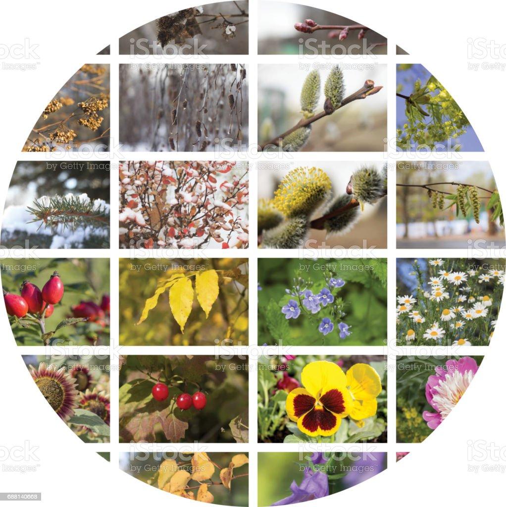 Four seasons collage. stock photo