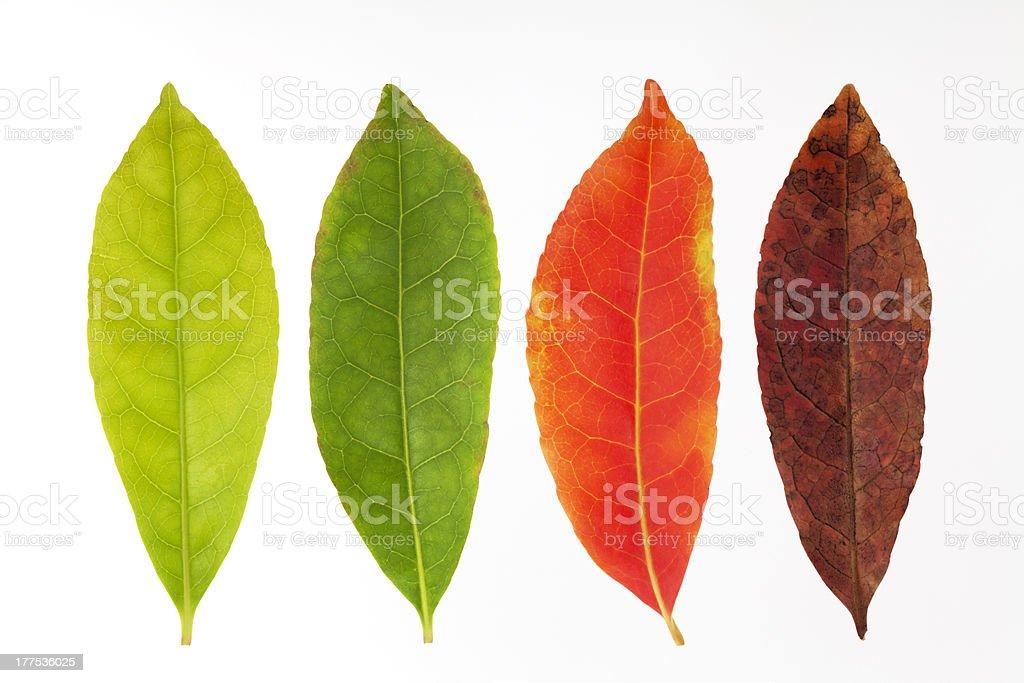 Four seasons leaves stock photo