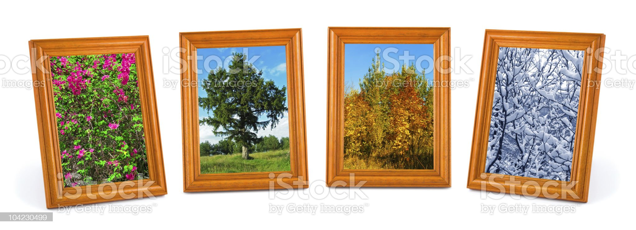 Four seasons (my photos) royalty-free stock photo