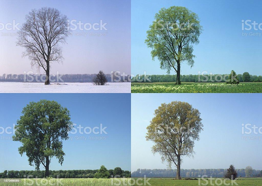 Four Seasons (image size XXL) stock photo