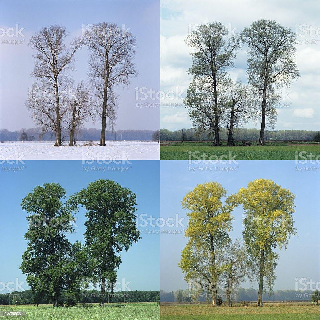 Four Seasons (image size XXL) royalty-free stock photo