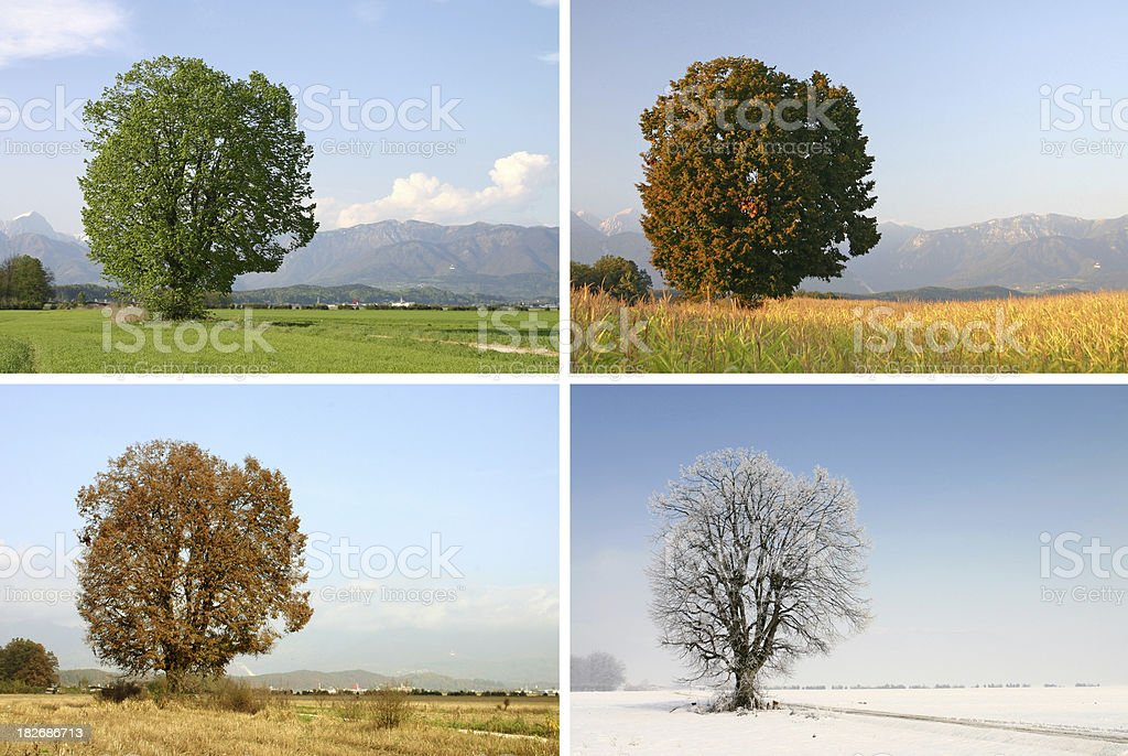 Four seasons stock photo