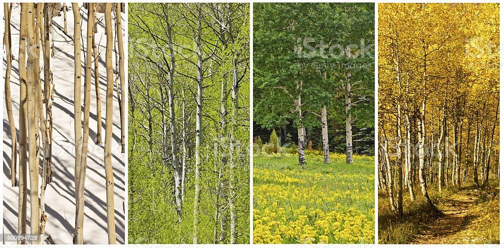 Four Seasons stock photo