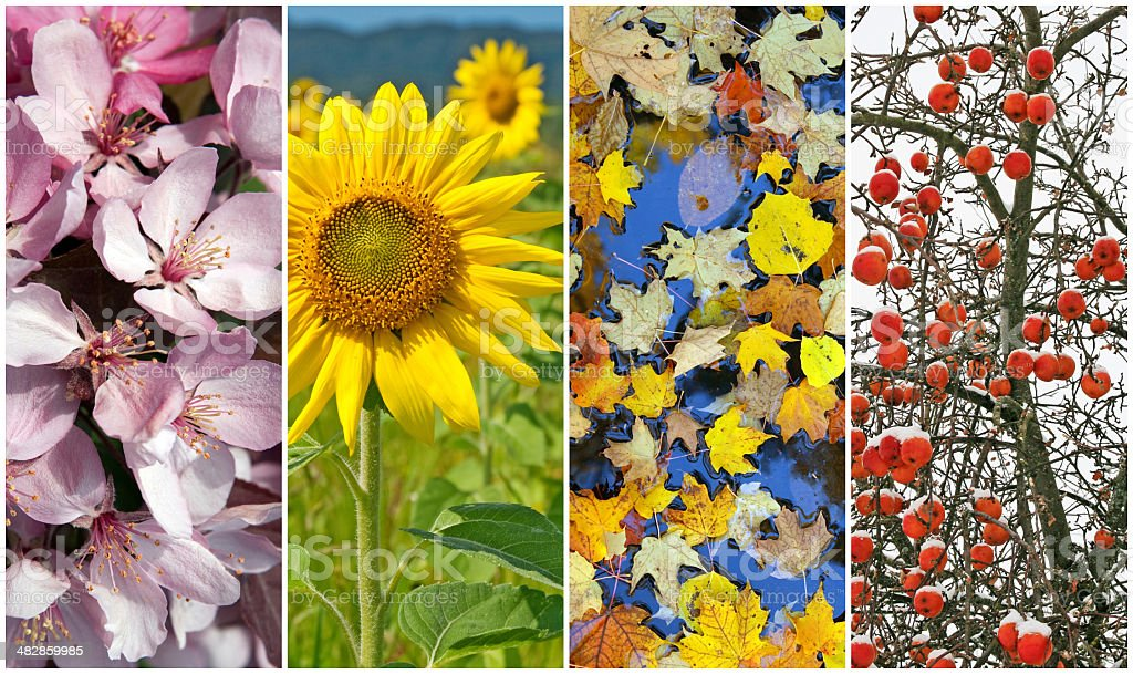 Four seasons. Spring, summer, autumn, winter. stock photo