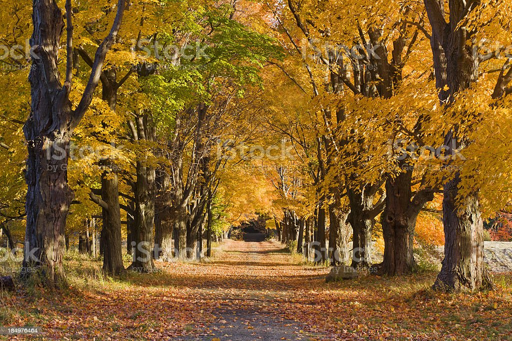 Four Seasons Tree Alley - Fall royalty-free stock photo