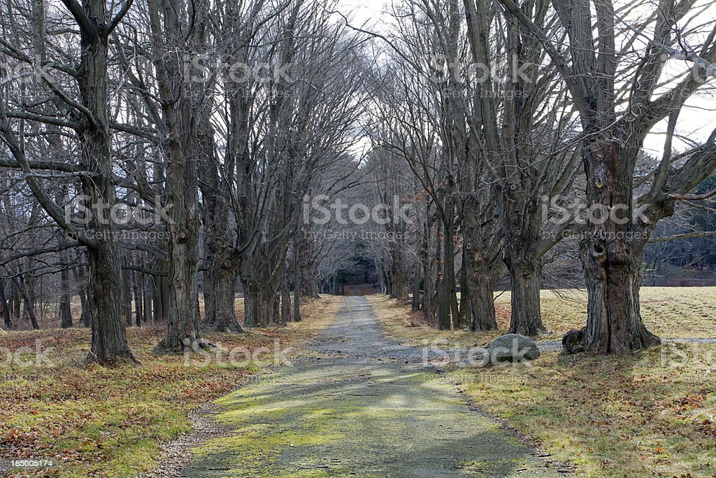 Four Seasons  Tree Alley - Spring royalty-free stock photo