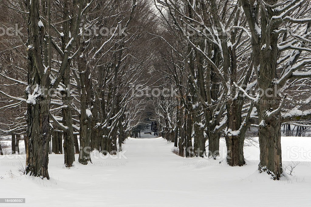 Four Seasons Tree Alley - Winter royalty-free stock photo