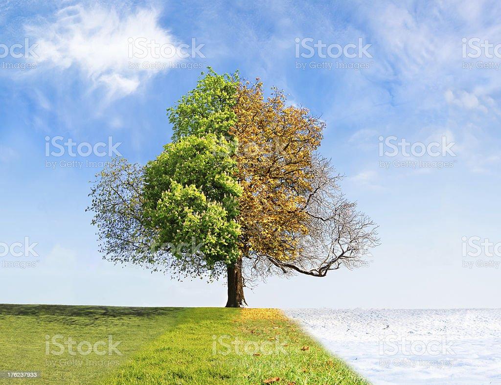 Four seasons tree royalty-free stock photo