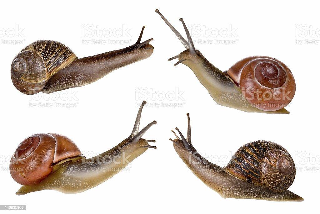 Four snails stock photo