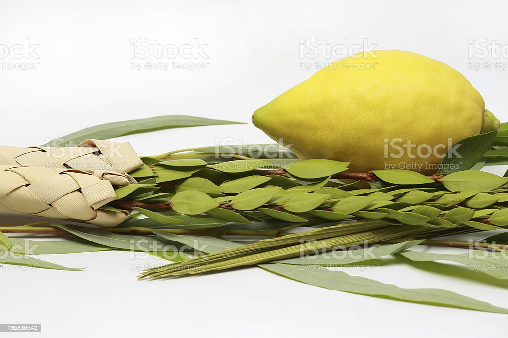 Four species for the Jewish holiday of Sukkoth stock photo