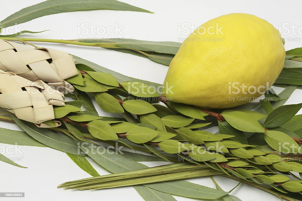 Four species from the Jewish holiday of Sukkoth stock photo