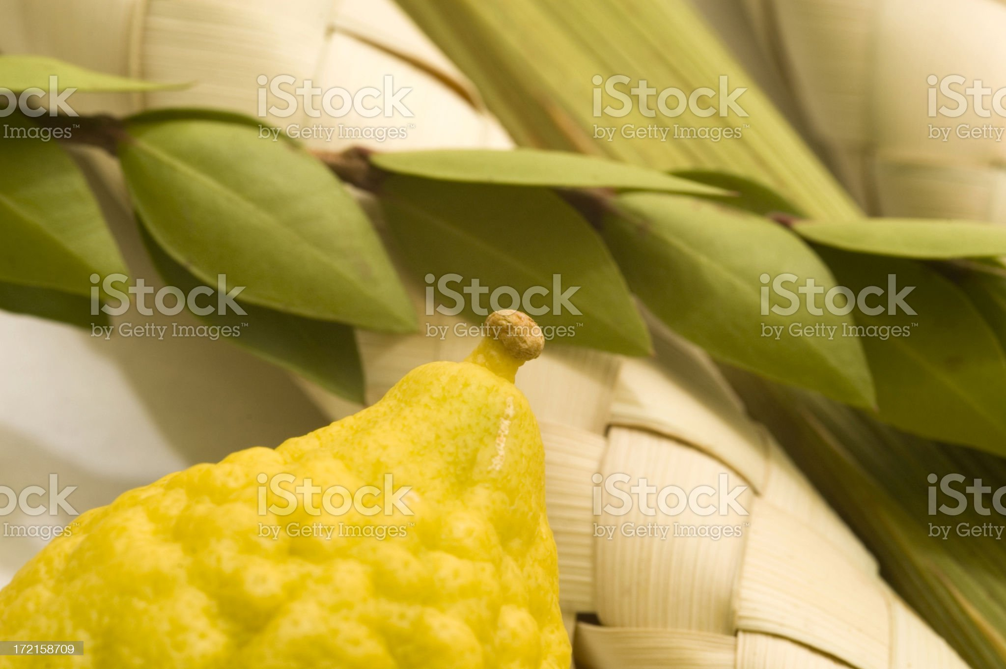 four species royalty-free stock photo