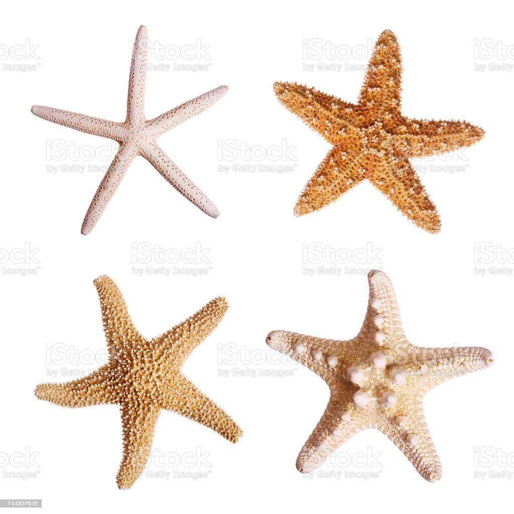 Four starfish against white background stock photo
