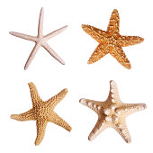Four starfish against white background