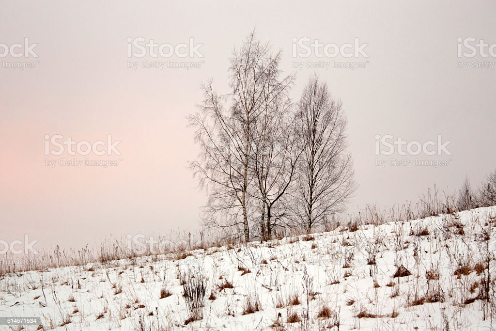 four trees in snowdrifts on  hill stock photo
