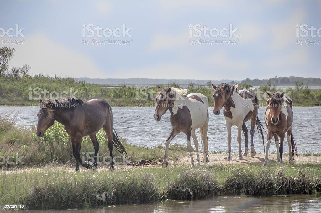 Four wild horses stock photo