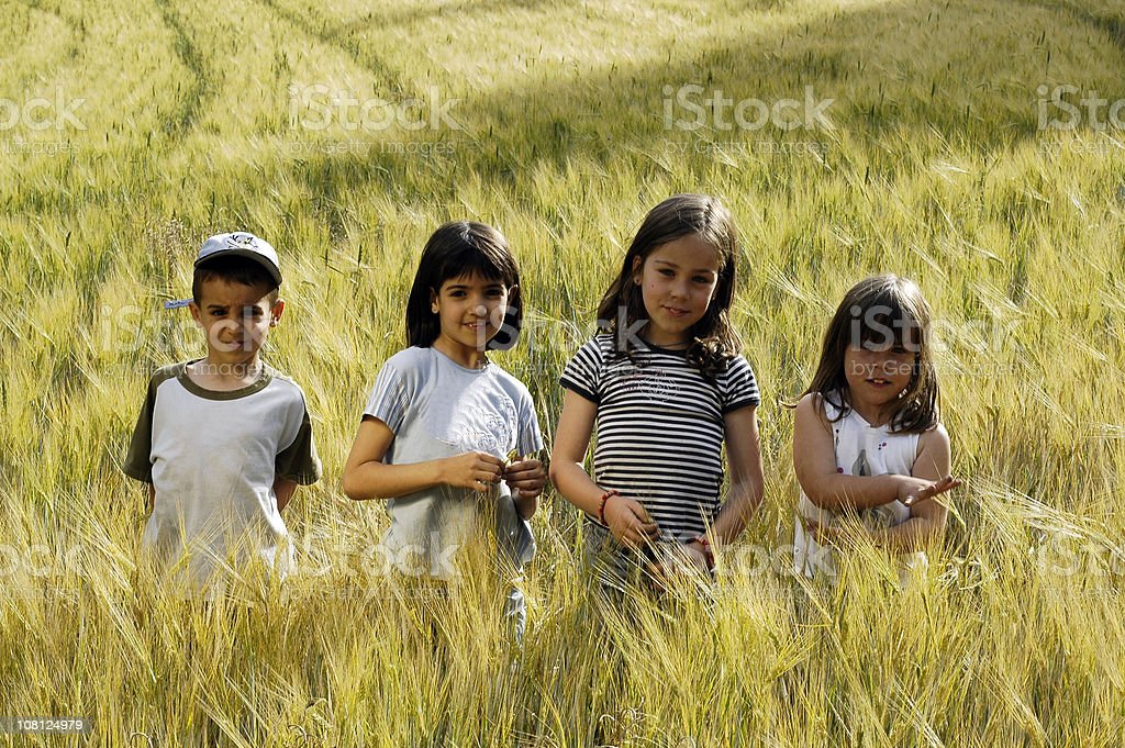 Four Young Children in Field of Tall Grass royalty-free stock photo