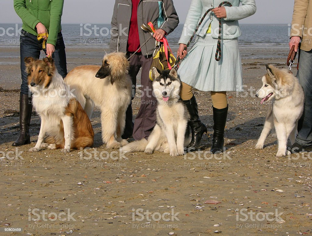 Four-footed friends stock photo
