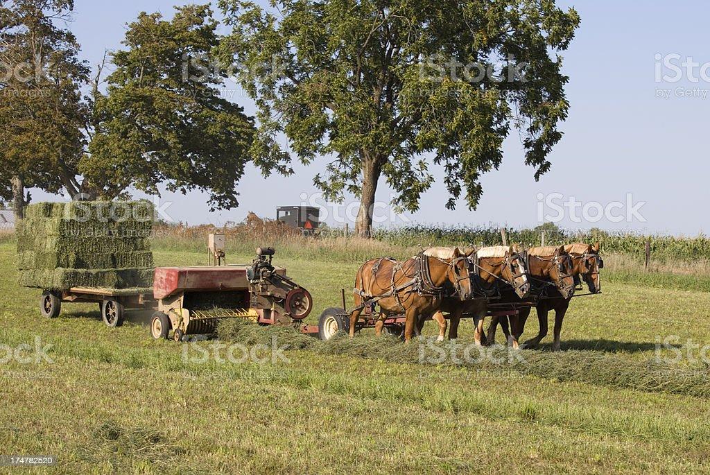 Four-horse team pulling hay baler on Amish farm royalty-free stock photo