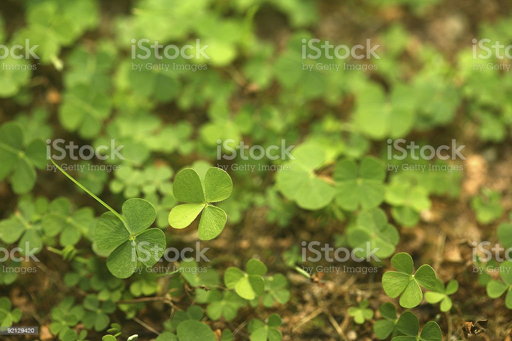 Four-Leaf Clover Forest royalty-free stock photo