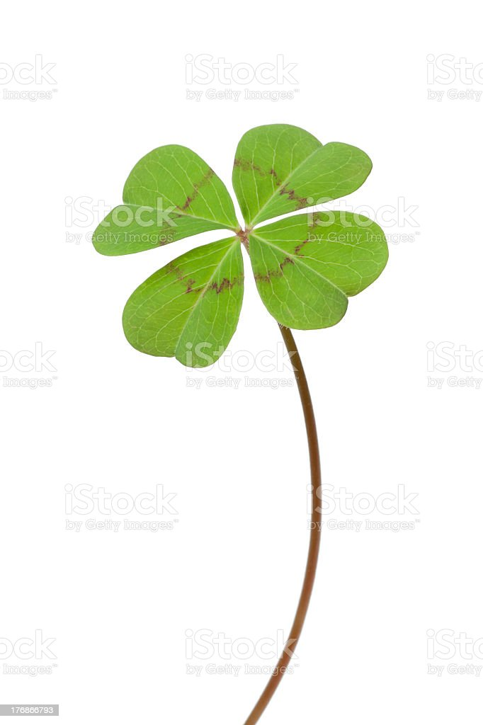Four-leaf clover stock photo