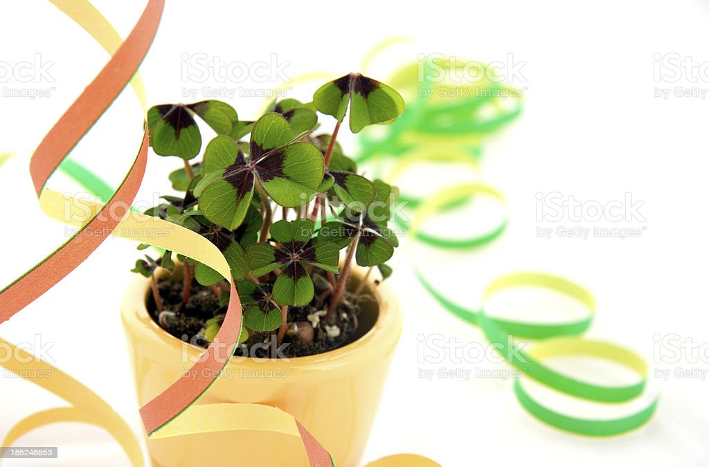 Four-leaf clovers with green and orange streamers royalty-free stock photo