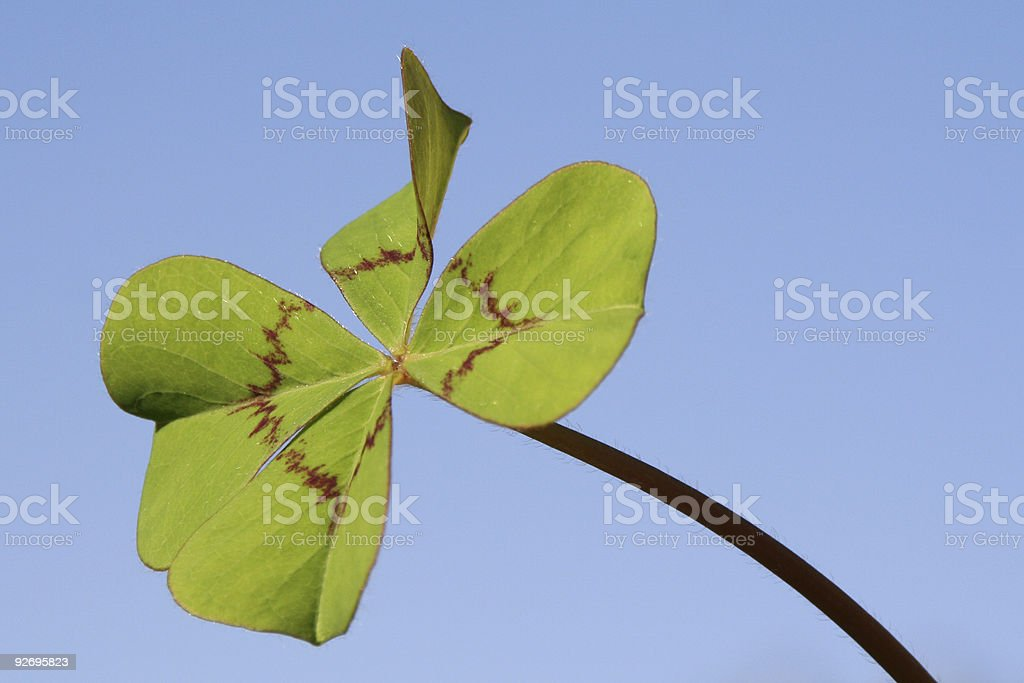 Four-leaved clover # 2 royalty-free stock photo