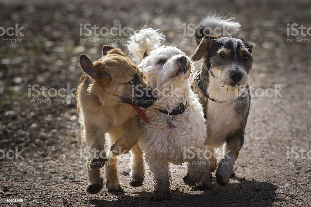 Four-legged Musketeers stock photo