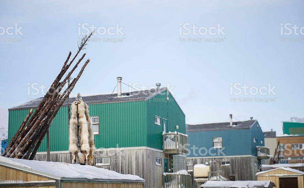 Fourrures de loups stock photo