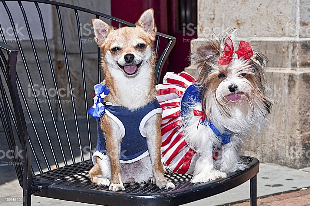 Fourth of july dogs stock photo