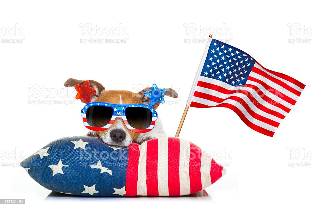 jack russell dog celebrating 4th of july independence day holidays...