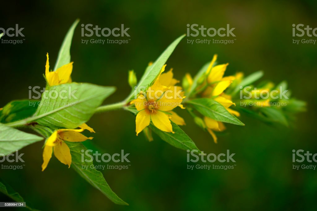 fower collections yellow stock photo