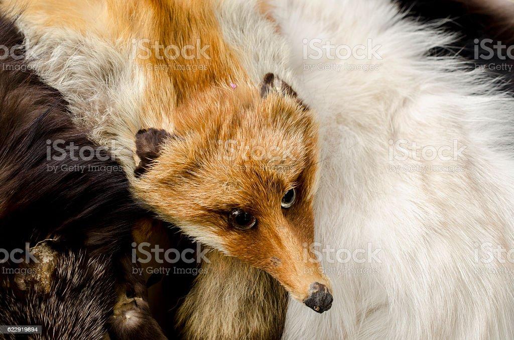 fox collar with the fox's head stock photo