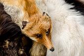 fox collar with the fox's head
