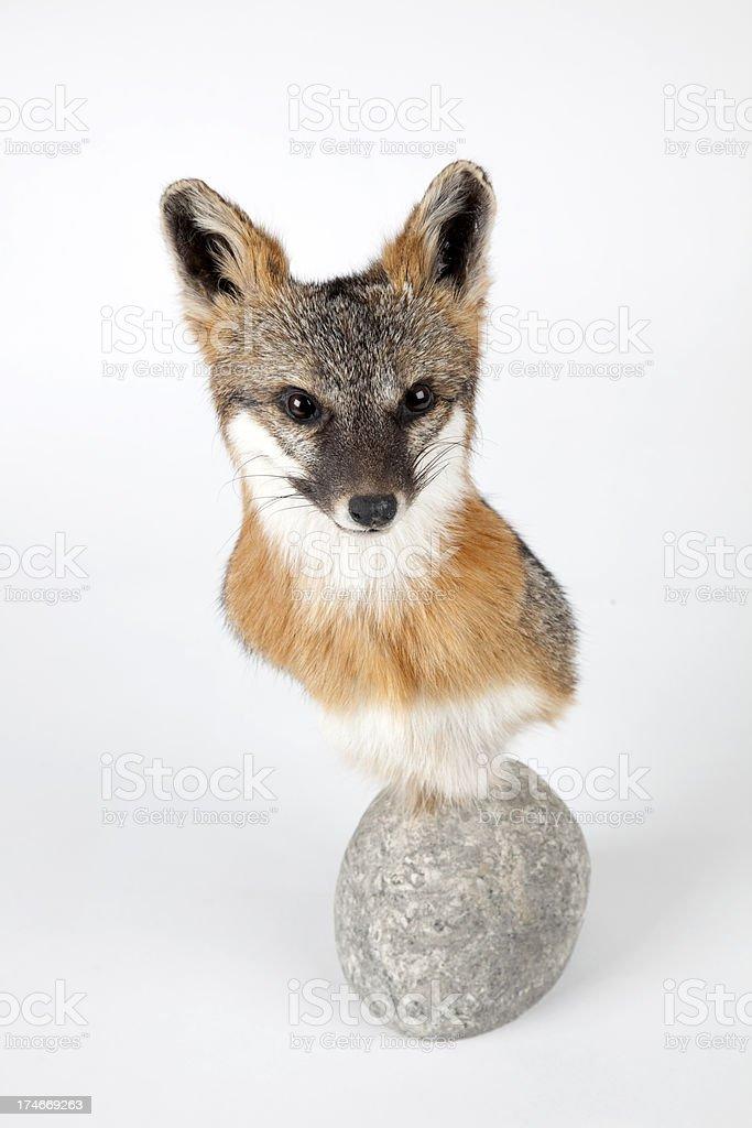 Fox head royalty-free stock photo