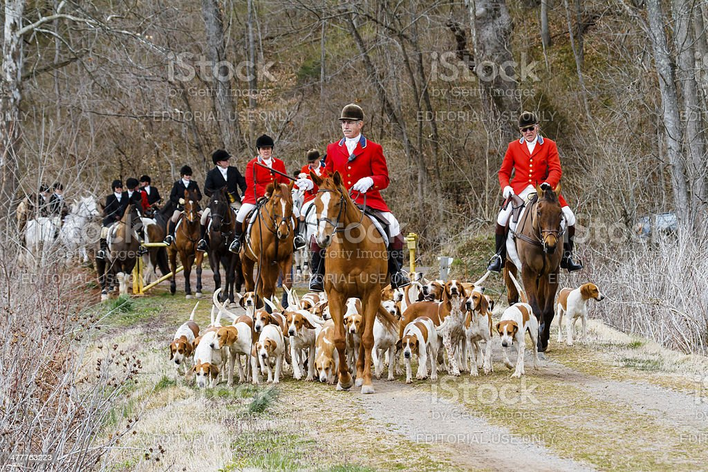 Fox Hunt -- Hounds, Horses and Riders stock photo