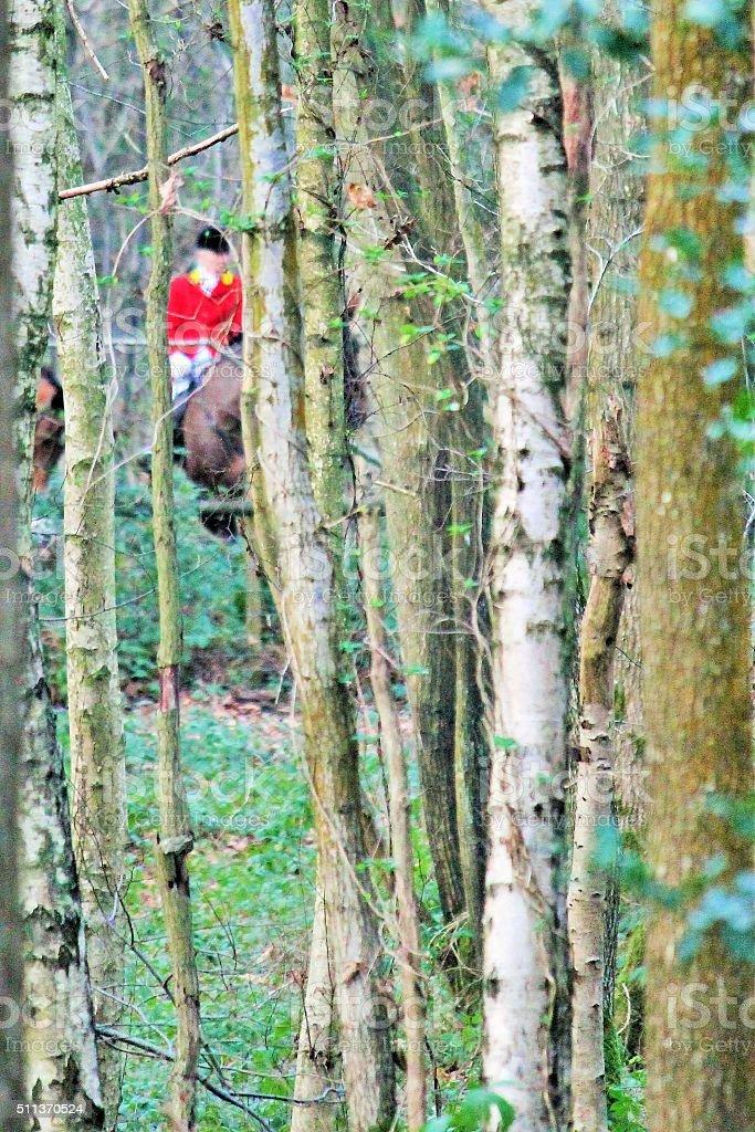 fox hunt Huntsman on horse defocussed in wood stock photo