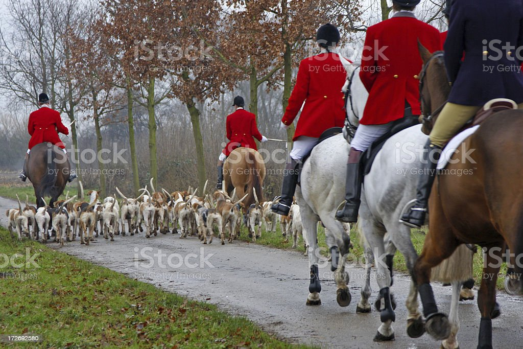 Fox hunt # 1 stock photo