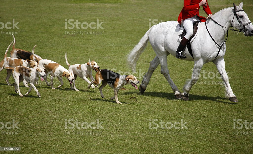 Fox Hunt stock photo