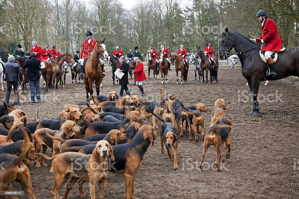 Fox hunting # 2 XXXL stock photo