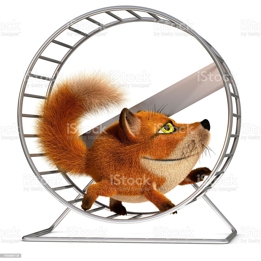Fox in the wheel royalty-free stock photo