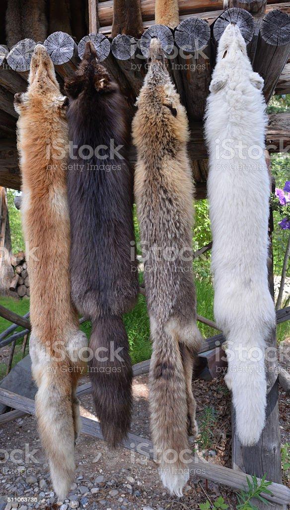 Fox pelts stock photo