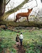 Fox watching children walking in the woods