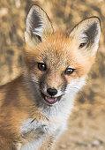 Fox Yearbook Shot