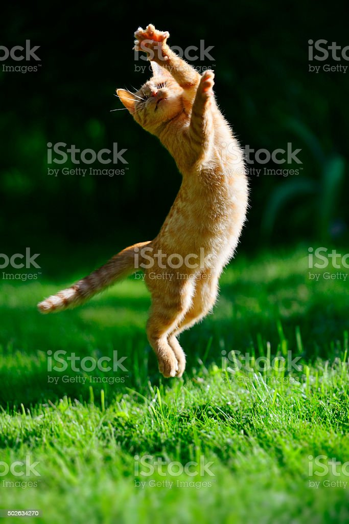 Foxy kitten stock photo