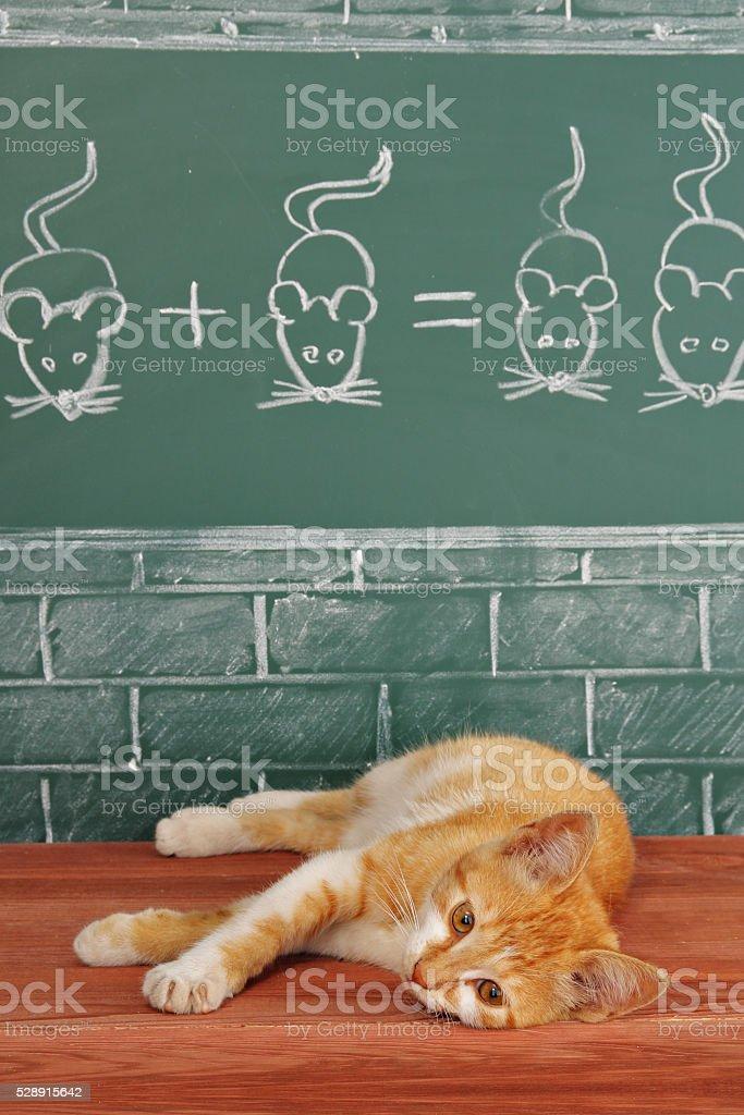 Foxy lazy Cat stock photo